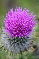 Nature Scotland Milton 20150703
